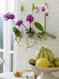 Enfeites de parede