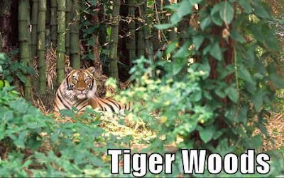In the trees Tiger Woods golfer 122 million from winnings