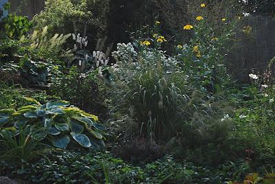 Stipa brachytricha Calamagrostis brachytricha   Achnatherum brachytricha
