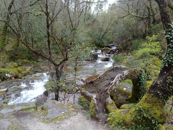 Rio Maceira