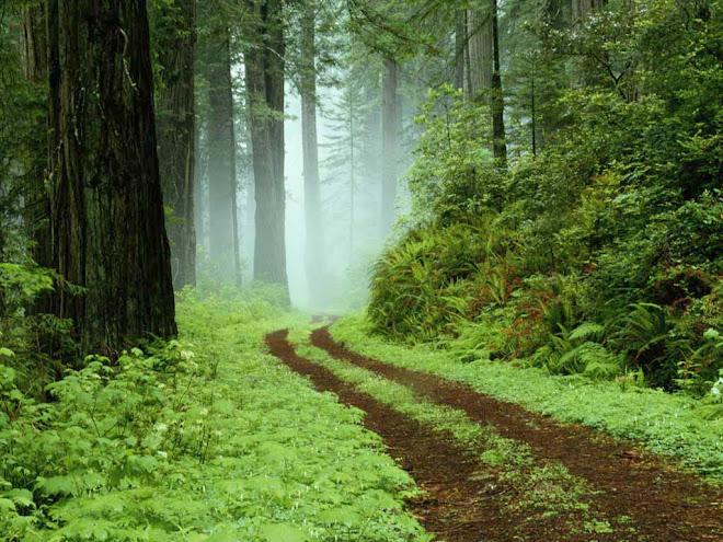 lungo il sentiero...