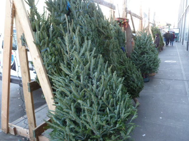 EV Grieve: Fined Christmas tree vendor leaves early; plenty of ...