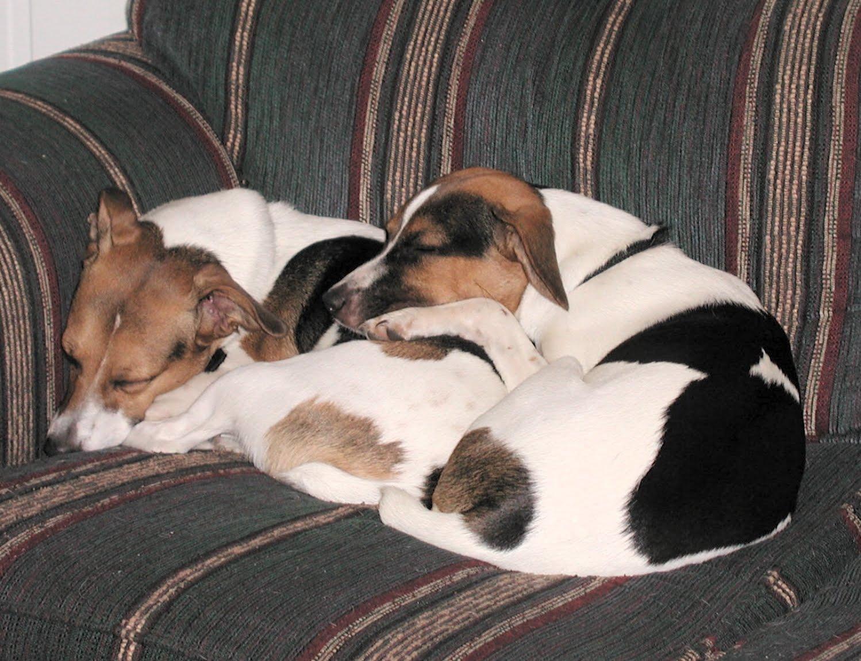 http://3.bp.blogspot.com/_p3MZA1JmdTk/TBUu7KfLJUI/AAAAAAAAAFo/7smcuEuJlt0/s1600/Dogs+sleeping.jpg