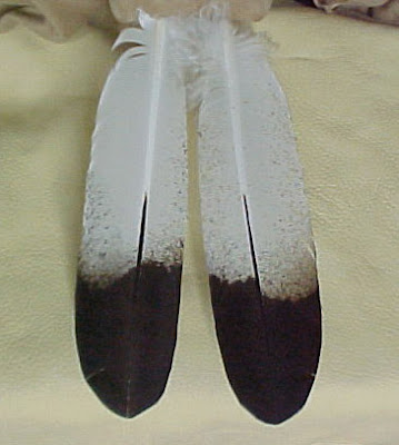 Eagle feathers are a sacred symbol in Native American culture.