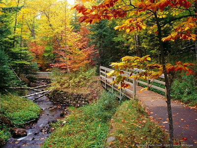 wallpapers of nature. Forest Nature Wallpapers