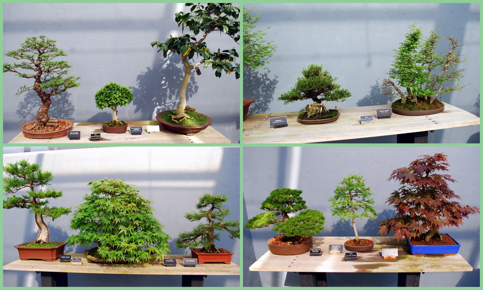 Mille Fiori Favoriti Bonsai At The Brooklyn Botanic Garden