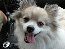My Grand Dog Maurizio