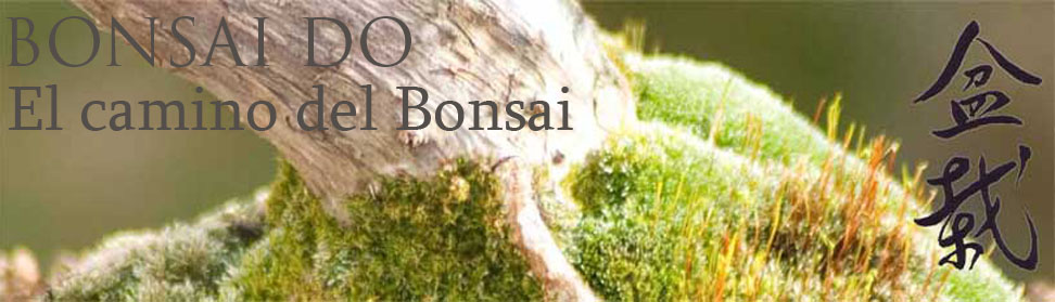 BONSAI-DO