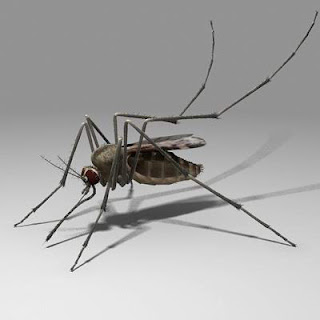 http://3.bp.blogspot.com/_p5jCiXEfLGc/SXVDZhqtBQI/AAAAAAAAA0o/CYvVfNAZxbI/s320/mosquito+01.jpg