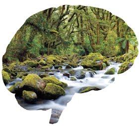 La mente ecologica e l'ecologia della mente