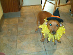 Sadie as a witch puppy