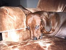 My puppy,Tawny