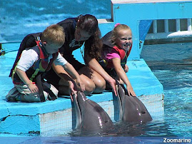 Golfinhos no zoomarine algarve