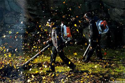 höstvindar, löv, blåsa höst löv, foto anders n, höst