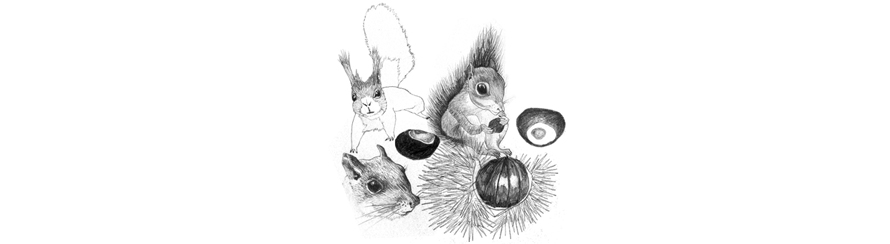 Chestnuts and Squirrels