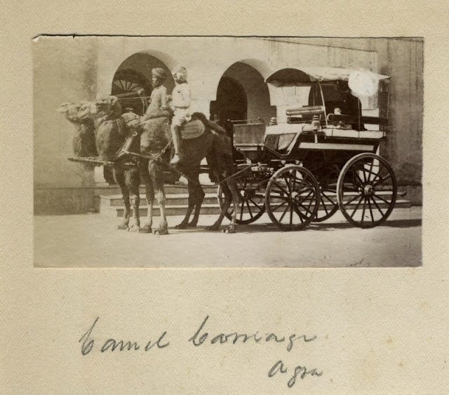 c.1880%2527s+PHOTO+INDIA+CAMEL+CARRIAGE