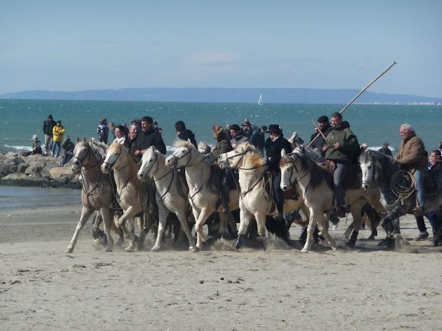 Grau du Roi abrivados des plages