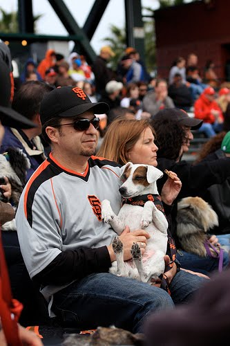 Sf Giants Dog Days Of Summer  Tickets