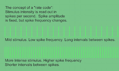 How a rate code works.