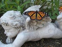 Triplet Butterfly Wings