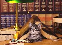 CATS PHOTO PLANET