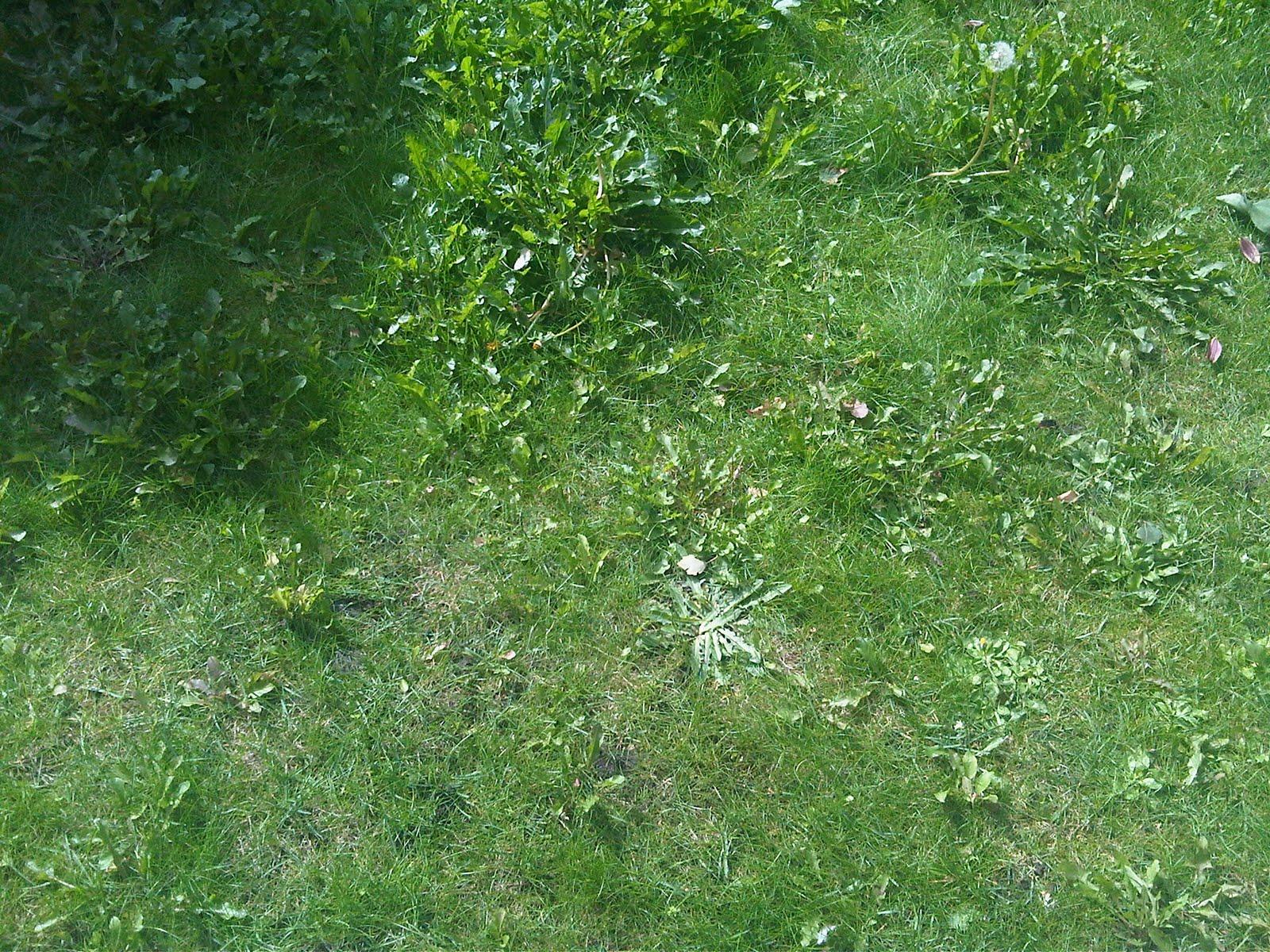 http://3.bp.blogspot.com/_pJSb5eUG4Is/THjv0fW7jeI/AAAAAAAABp8/EZZ6Z-BcI3U/s1600/grass.jpg