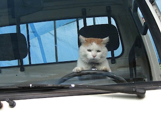 [cat.cats.funny.pussy.black.white.yellow.picture.pictures.lol.cute.fat.list.pics.kitty.kitten.kitties.sleep.lovely.fun.lolcat.computer.driver.driving857-duhlivery.jpg]