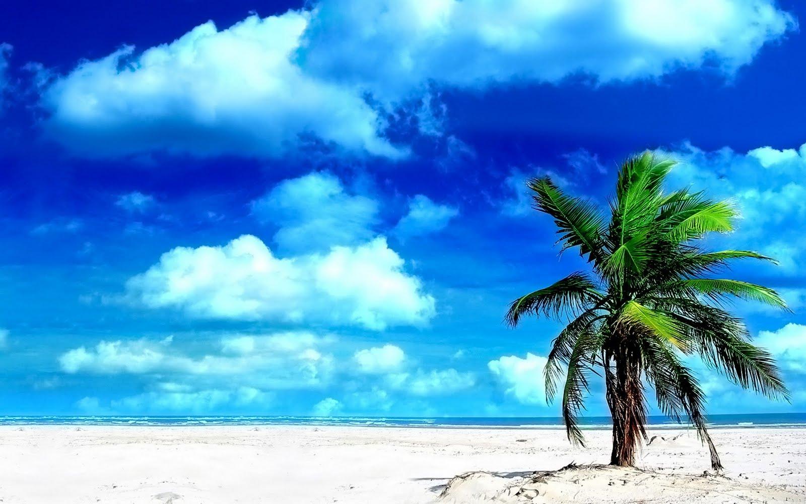 http://3.bp.blogspot.com/_pL5EC1FUMfM/S9h7zt3msWI/AAAAAAAAAAs/lHhr9bHoneQ/s1600/Palm_Tree_1680+x+1050+widescreen.jpg