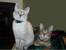 Taji and Max