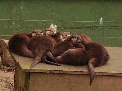 An otter knot