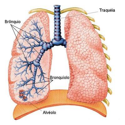 Vias respiratórias