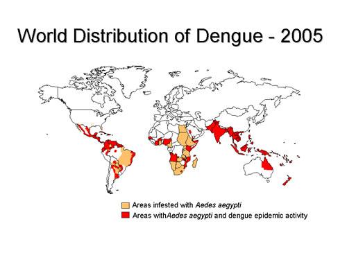 Dengue - distribuição mundial