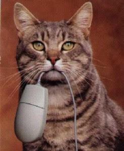 smiješne slike mačke miš besplatne download