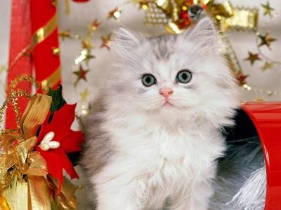 Božićne slike mačka čestitke free download e-cards Christmas cat