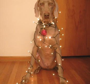 Božićne smiješne slike besplatne čestitke download