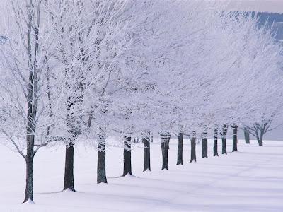 Snijeg i bijela stabla, zima download besplatne pozadine slike za desktop