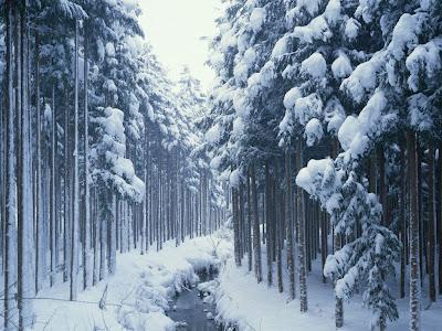 Zaleđena rijeka, snijeg, šuma, zima download besplatne pozadine slike za desktop kompjutera