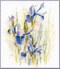 Магазин цветов и благородных ирисовконфеты ирис частных фотографий, фотоальбомовelenamumrina бактериоз.