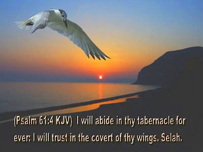 psalm 61:4 KJV i will abide in thy tabernacle for ever i trust in the covert of thy wings selah jesus christ bible verse wallpapers with desktop image background of white squirrel bird flying on the sea shore from the rising sun background wallpapers of christians download free hot photos fotos