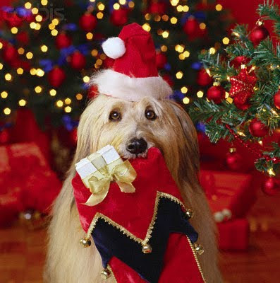 Christmaspuppies Wallpaper on Beautiful Christmas Dog Decorated With Christmas Santa Dress At