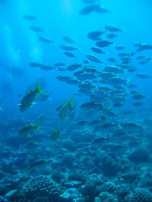 Le changement climatique rend les poissons plus petits