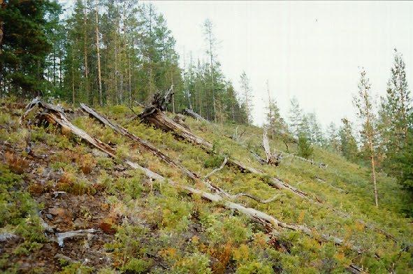 L'enigma della disposizione degli alberi abbattuti a Tunguska