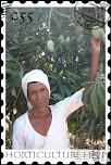 आम की खेती