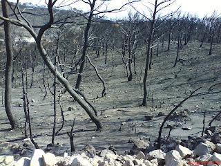 piinar quemado bosque alto Valmadrid