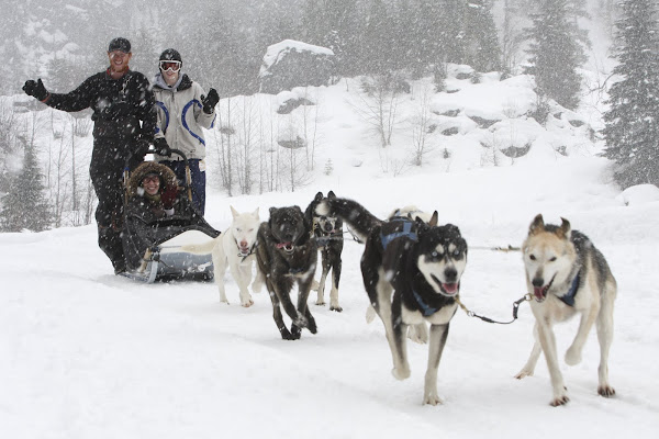 Dog Sledding at Whistler 2009
