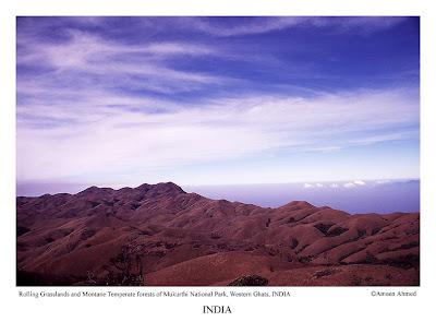 Grasslands of Mukurthi National Park (Tamil Nadu) overlooking Silent Valley national park (Kerala)