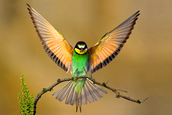 Beautiful Birds Wallpapers posted under Nature Wallpapers
