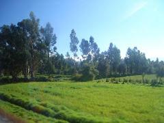 Valle del Mantaro.- JUNIN - PERU.