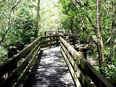 Mangrove Arboretum at Sungei Buloh