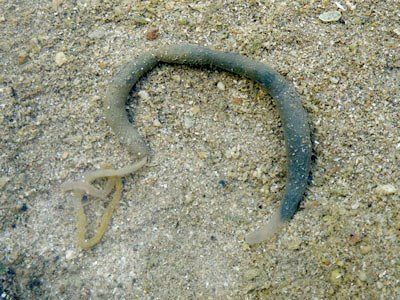 Unidentified worm